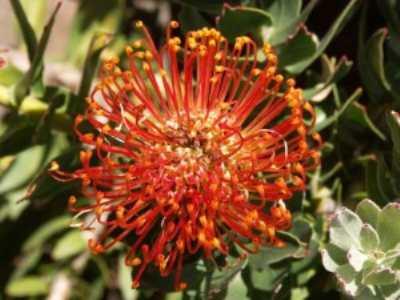 Флора Австралии