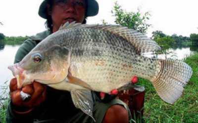 Увлекательная рыбалка в Таиланде