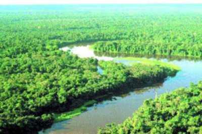 """Амазония - """"Зеленые легкие"""" планеты"""