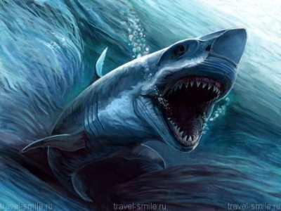 Акулы, большая белая акула, слоновая акула