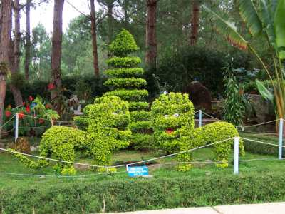 Высокогорный курорт Вьетнама Далат и его волшебная природа