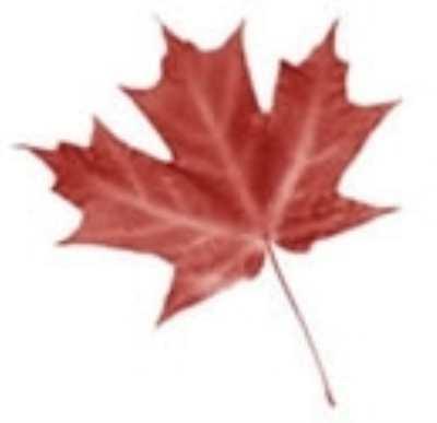 Растительный и животный мир Канады